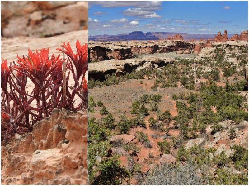 Natural Connections: 'A Paintbrush For The Desert'