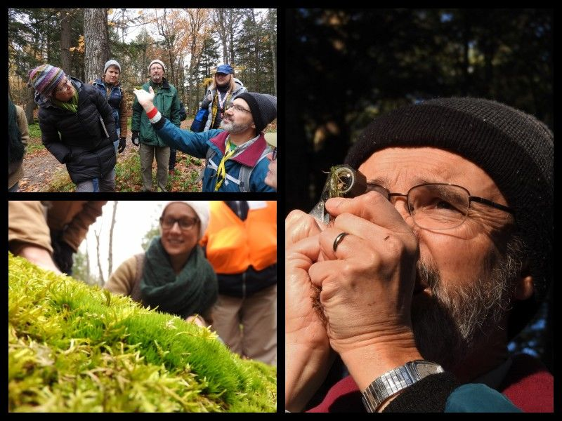 Natural Connections: Discovering Moss