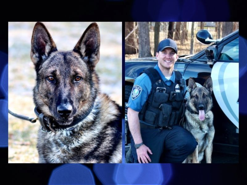 St. Croix Falls Police Department Introduces K-9 Officer Ikar