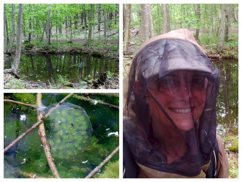 Natural Connections: Community Science And A Quest For Salamander Eggs