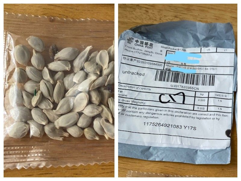 Unsolicited Seeds That Appear To Be From China Arriving In Wisconsin Mailboxes