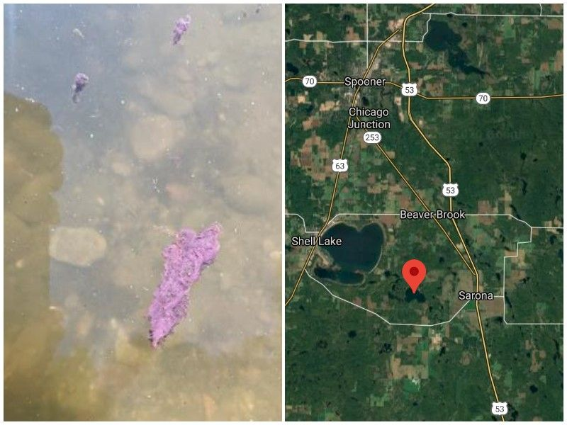 Blue-Green Algae Identified On Washburn County Lake