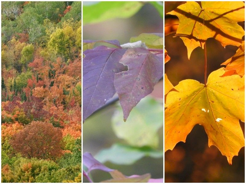 Natural Connections: Fall Colors