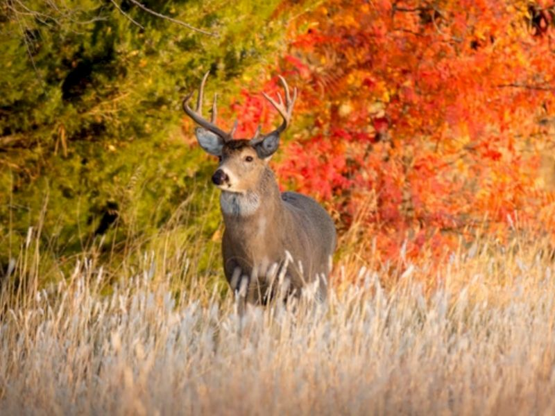 Hunters Are Reminded To Register Their Deer - It's Required