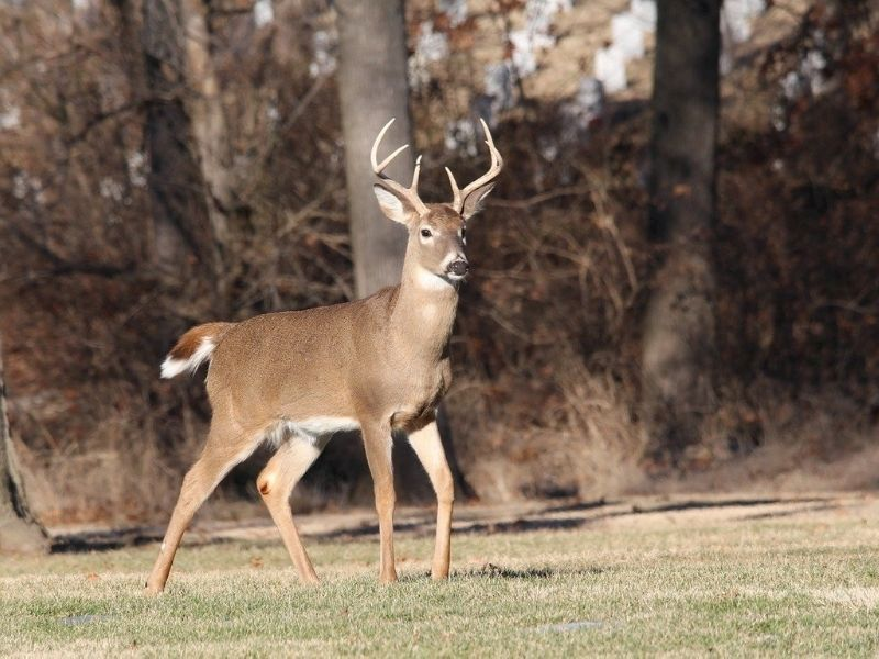 Burnett County Deer Farm Tests Positive For CWD