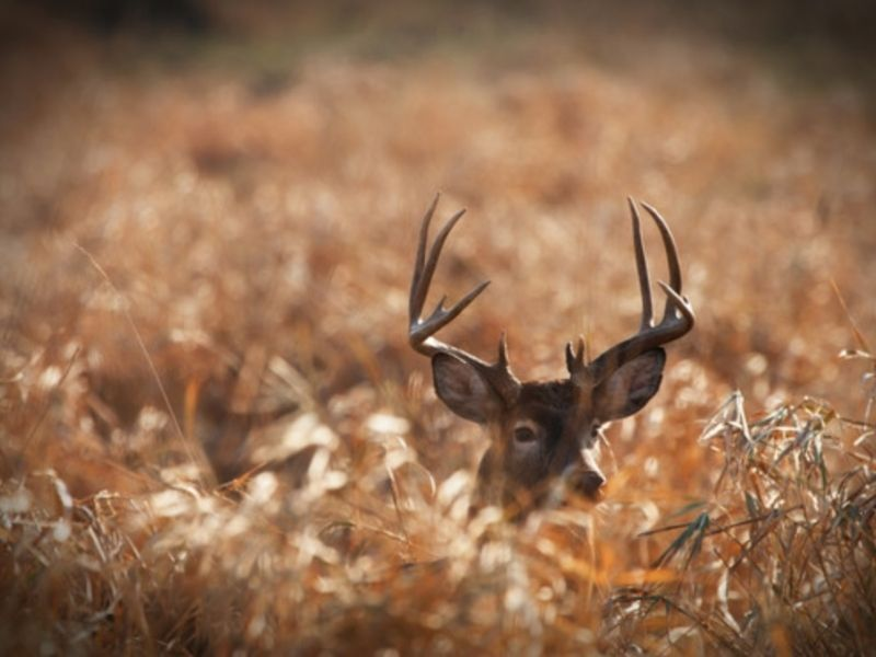 DNR: Sales For All Deer Licenses Up From Same Time Last Year