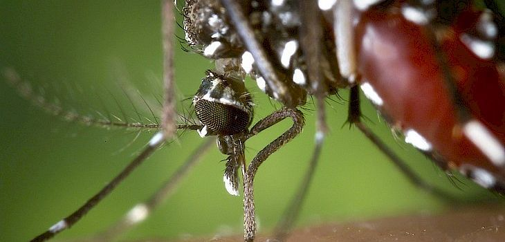 Human West Nile Virus Confirmed in Barron County