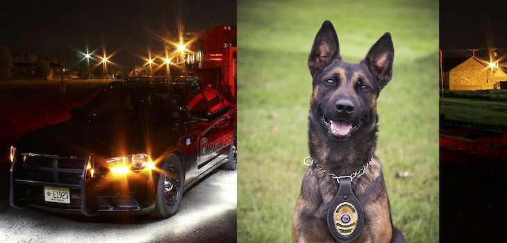 21 Things You Might Not Know About Me: K9 Bleu
