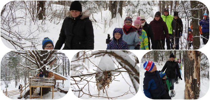 Natural Connections: A Winter Walk with Lois Nestel