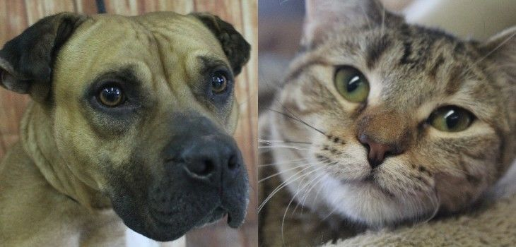 Northwoods Humane Society Pets of the Week