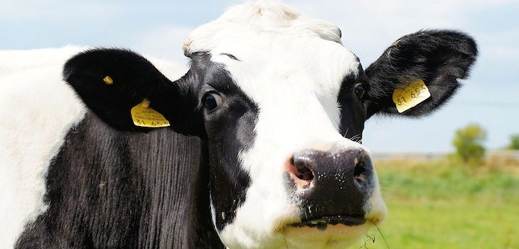 Federal Judge Enters Consent Decree Against MN Dairy Farm for Drug Residue Violations