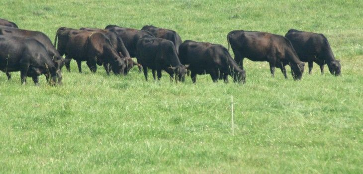 Washburn County Land and Water Conservation Dept: Rotational Grazing Initiative