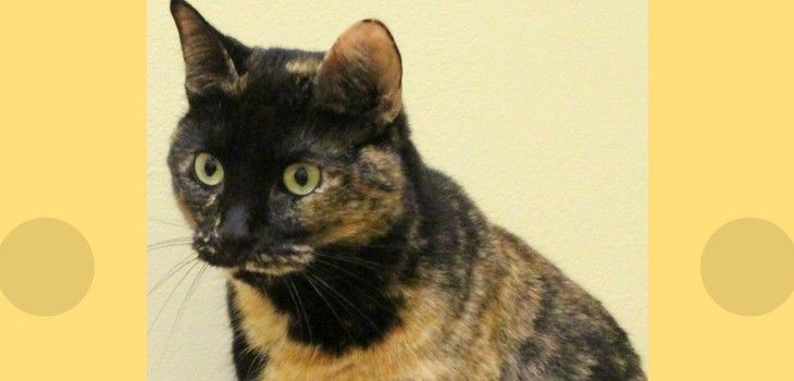 W.C.A.H.S. Pet of the Week