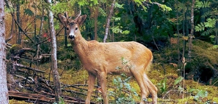 UPDATE: Committee Scraps Provision Restricting Movement Of Harvested Deer