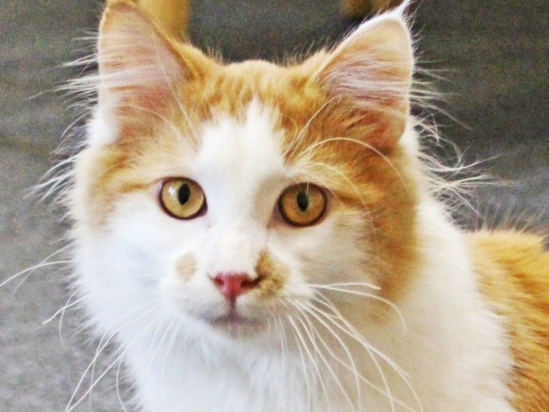 Pet of the Week from the Washburn County Area Humane Society