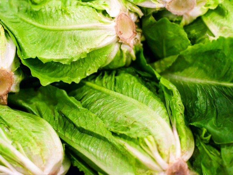 CDC Urges People Not To Eat Romaine Lettuce Amid E. Coli Concerns