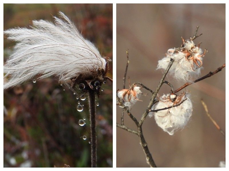 Natural Connections: Willows