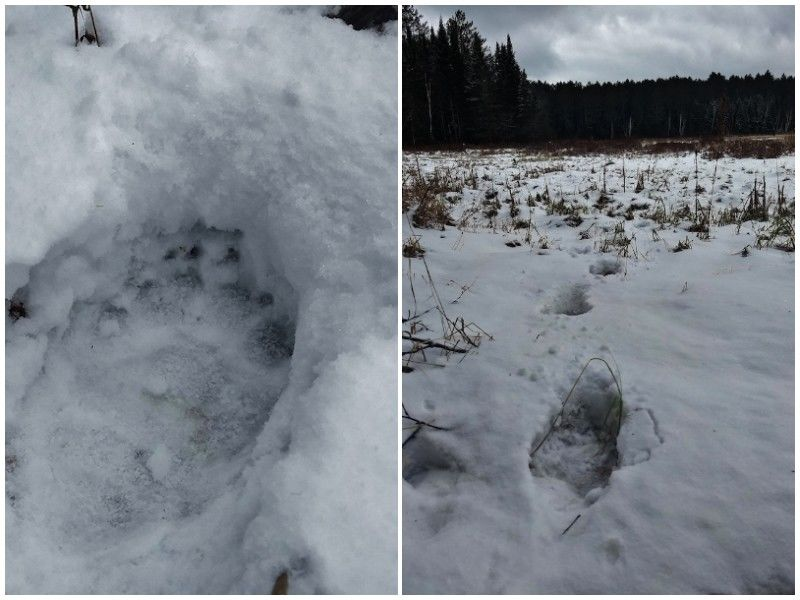 Natural Connections: Big Tracks and Cold Toes