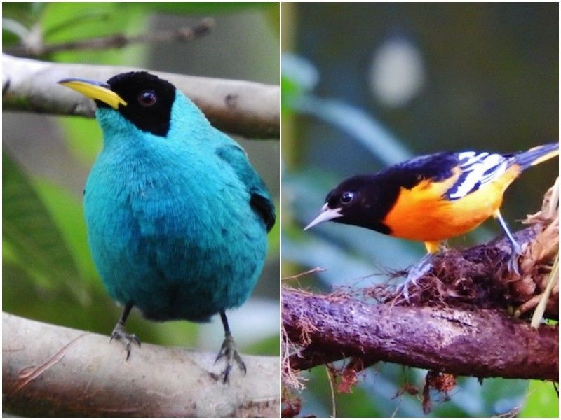 Natural Connections: Neotropical Migrants