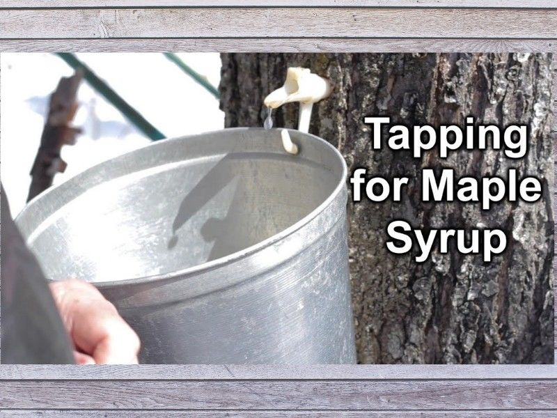 Northwoods Hardware Hank Has All Your Maple Syrup Tapping Supplies