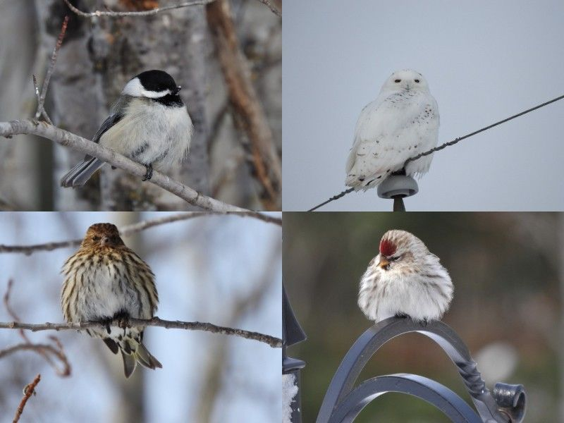 Natural Connections: Winter Birds
