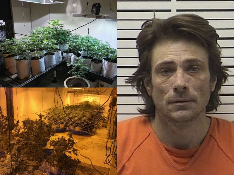 Court Sentences Man Charged With Growing Hundreds Of Pot Plants
